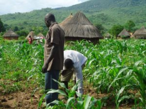 FG To Empower 77,400 Young Famers